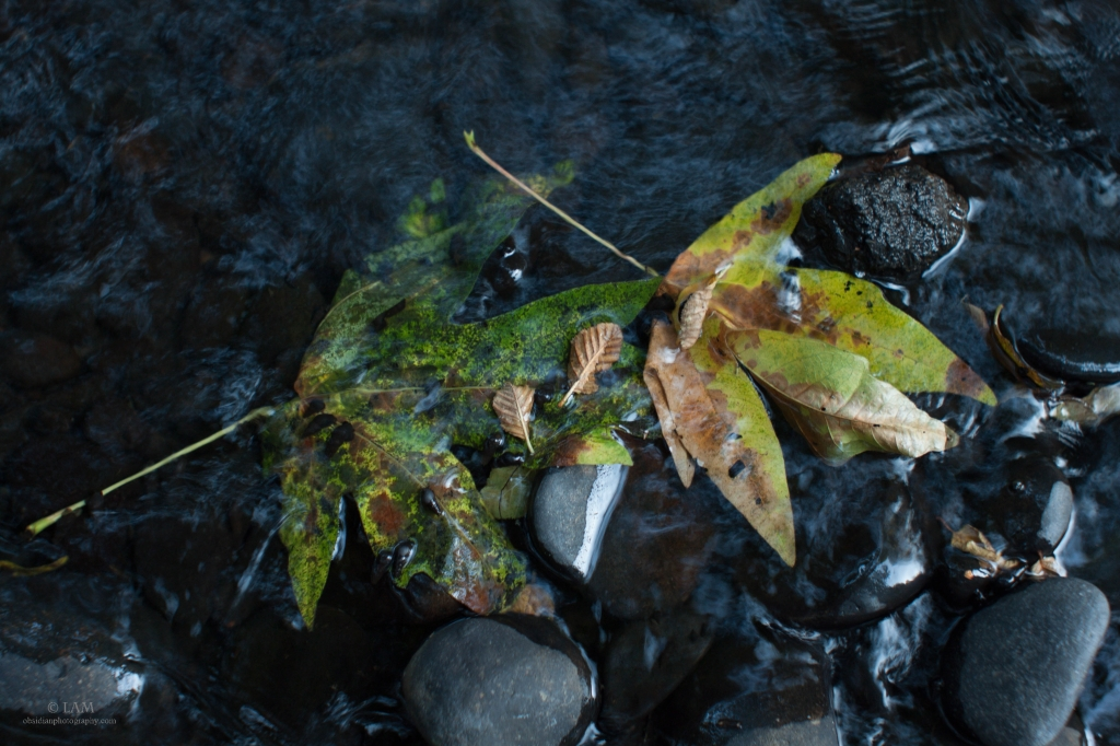 Two maple leaves underwater in a creek, chaned to vibrant colors of motled green, rust, yellow, and orange