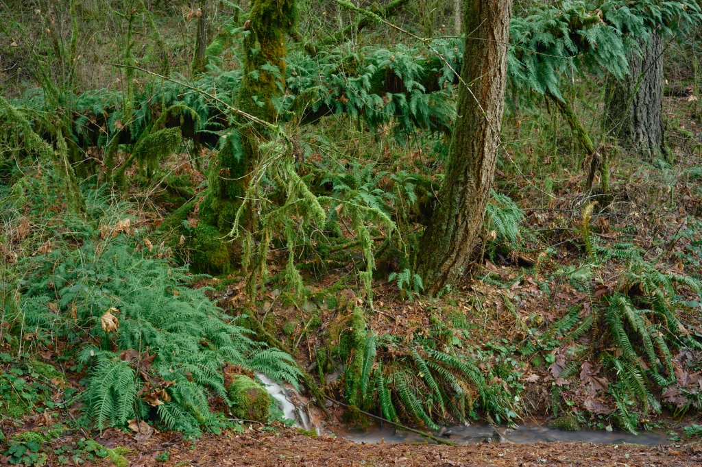 a forest with two main tree trunks covered in green lichen, another large tree growing horizontally behind them covered in ferns, a smooth water fall is barely visible, partially obstructed by ferns
