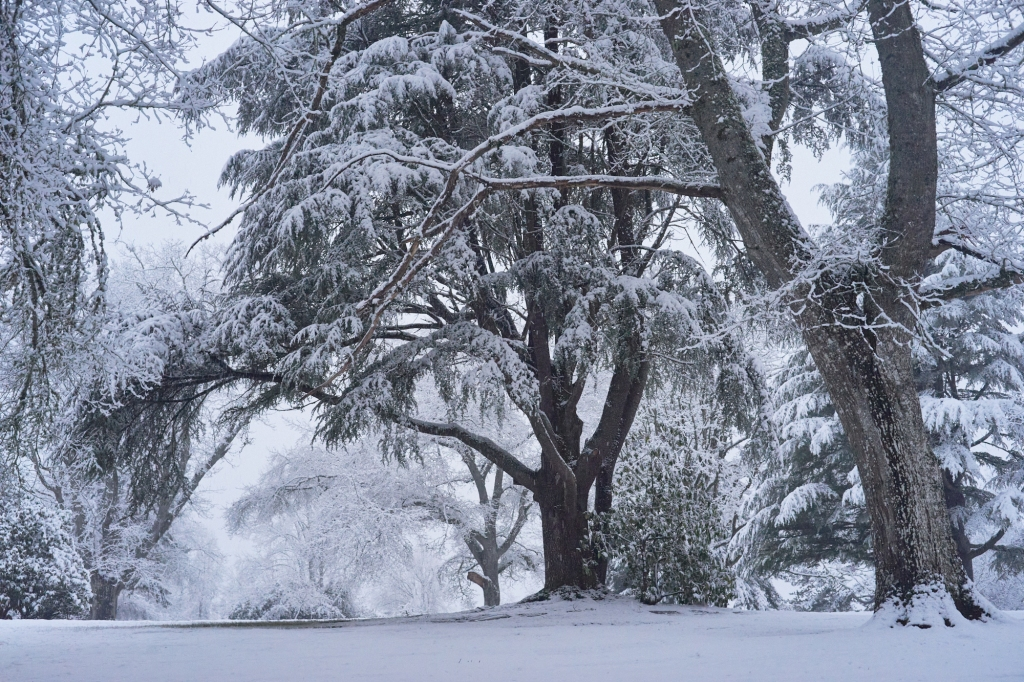 A snow scape of a road with large trees branched over head covered in snow